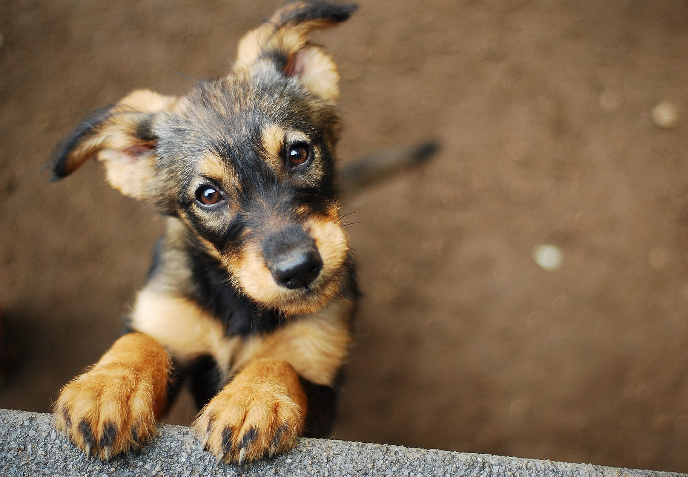 Puppy scammers target lonely Aussies during lockdown