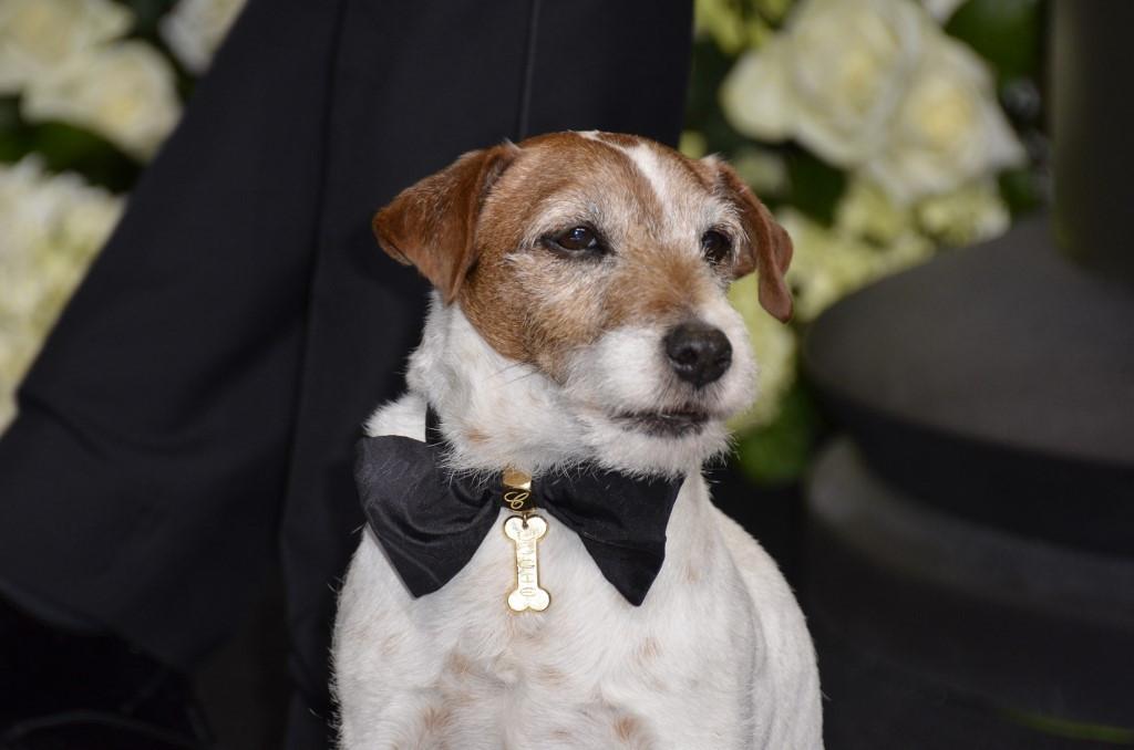 Uggie the star of 'The Artist' wins greatest movie mutt award