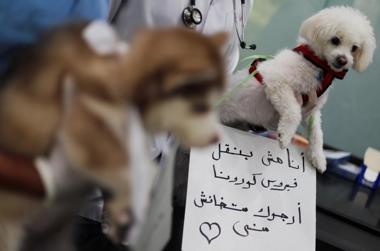 Don't abandon us, we don't transmit coronavirus, say Cairo dogs and cats