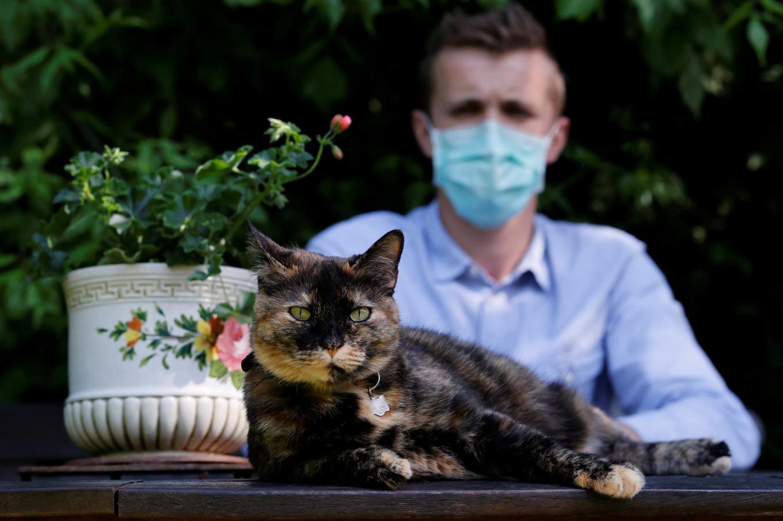 Feline good: French cat survives coronavirus infection - Health ...
