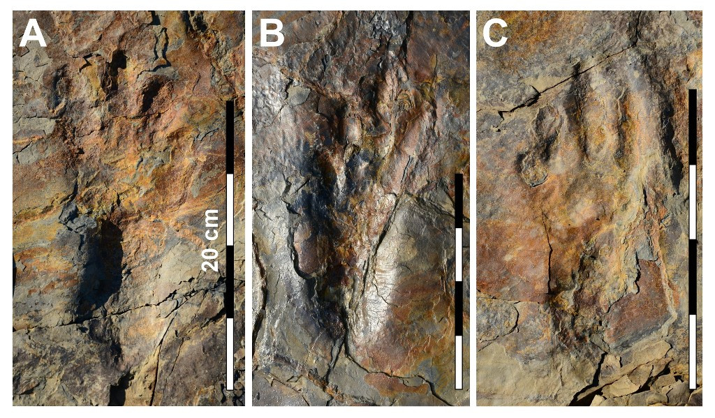'Tight-rope walking' croc may have stood on two legs: Study