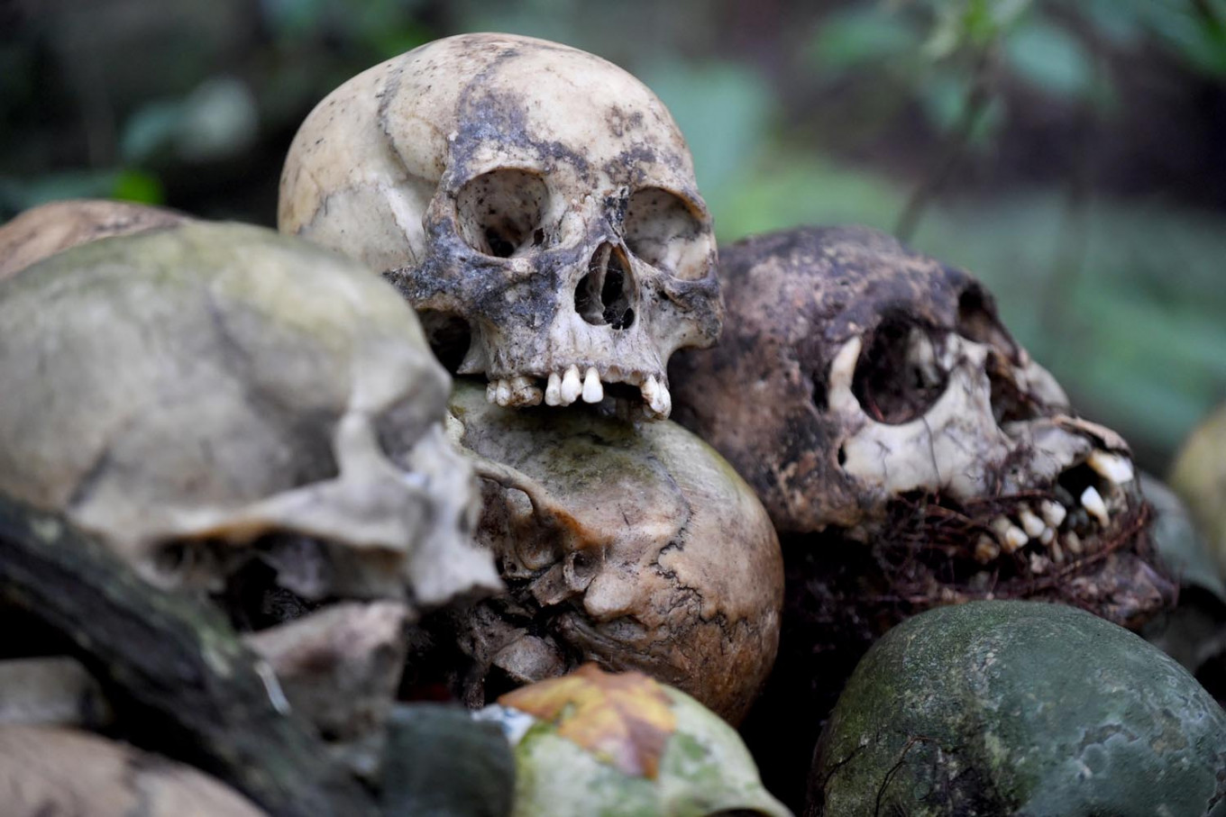 This picture taken on February 20, 2020 shows skulls at a cemetery where Bali's Trunyanese people hold open-air burials - before restrictions were implemented due to the COVID-19 coronavirus - near the village of Trunyan in Bangli Regency, near Lake Batur on Bali island. - For centuries Bali's Trunyanese people have left their dead to decompose in the open air, the bodies placed in bamboo cages until only the skeletons remain -- a ritual they haven't given up -- even as the COVID-19 pandemic upends burial practices worldwide. AFP/Sonny Tumbelaka