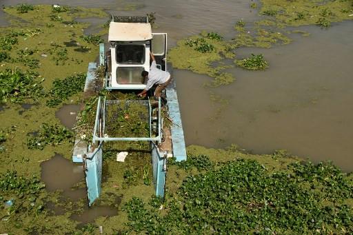Water hyacinth pest chokes Iraq's vital waterways