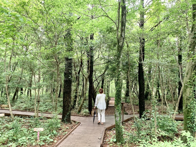 A tourist walks along a path in the Seogwipo Forest of Healing.