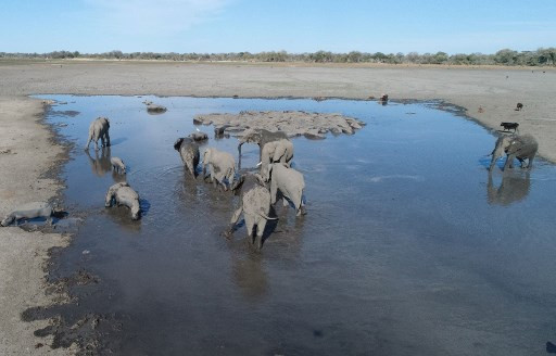 Mystery deepens behind odd  deaths of 356 elephants in Botswana