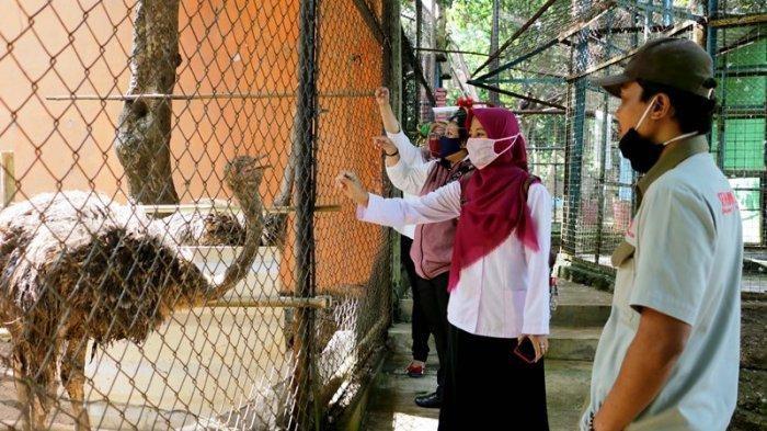 Tiger cubs Covi, Vivid welcome Semarang Zoo visitors on reopening day