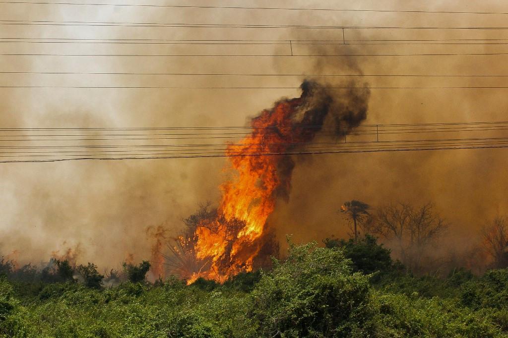 Fires triple in Brazil's Pantanal wetlands in 2020