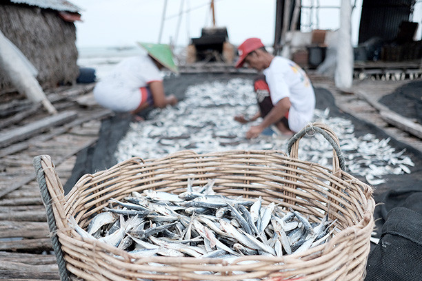 Business Grows 86 Times, Aruna Fisheries Startup Received Funding