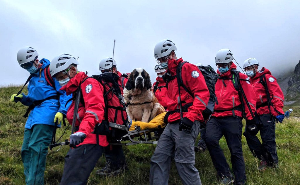 Sheepish St Bernard dog rescued from English mountain