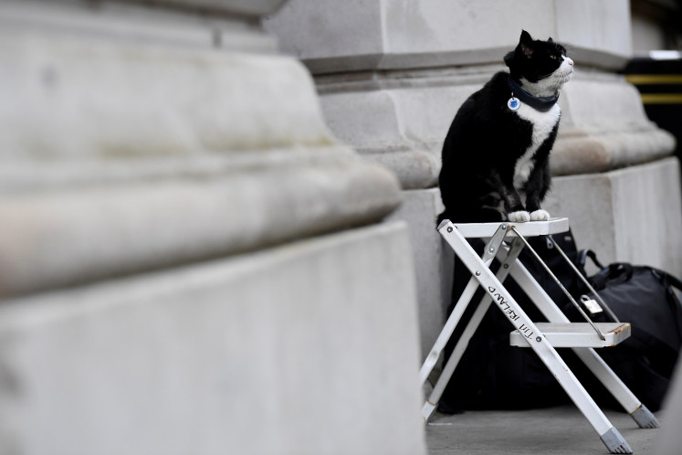 Paws for reflection: British Foreign Office cat heads for retirement