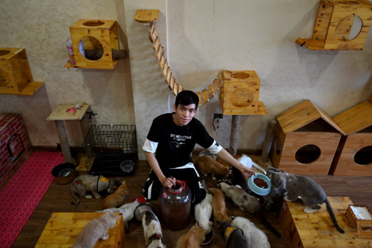 Vietnam cat cafe offers purr-fect pick-me-up for rescued felines