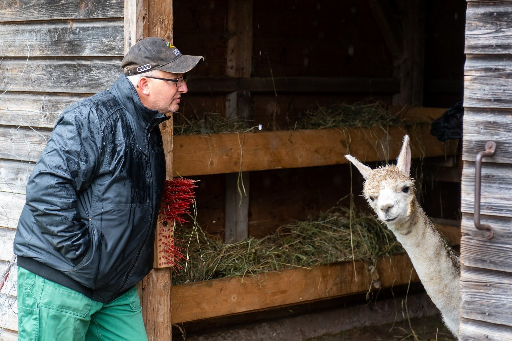 Alpaca therapy helps convicts with mental illness