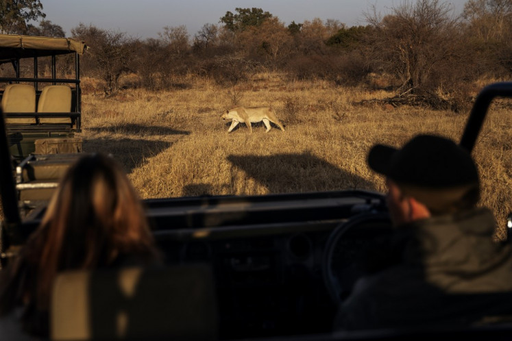 Local tours bring some relief to South Africa safari industry