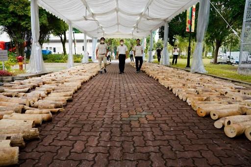 Singapore crushes massive ivory haul on eve of World Elephant Day