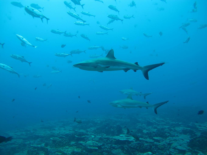 'Secret' life of sharks: Study reveals their surprising social networks
