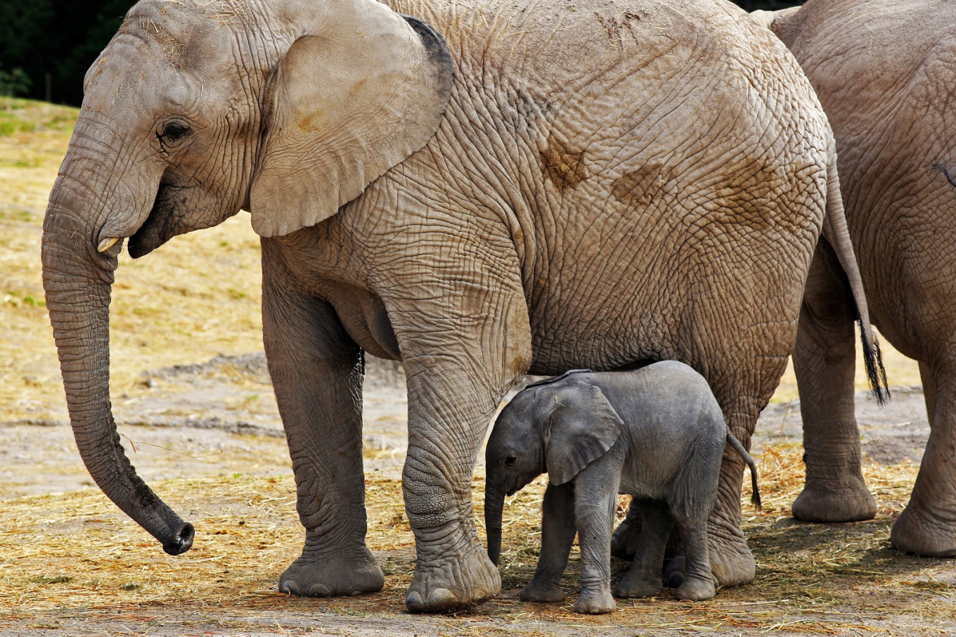 Mexican zoo live-streams birth of elephant named 'Zoom'