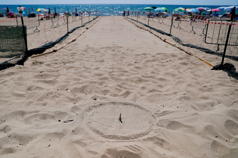Rome beach awaits baby turtle hatching