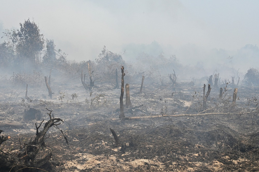 Jokowi's deregulating can cripple Indonesia's climate plan