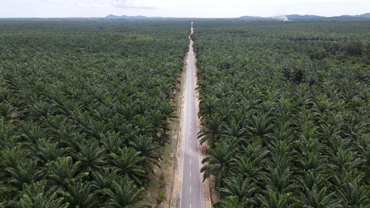 Awaiting Switzerland's decision on Indonesian palm oil