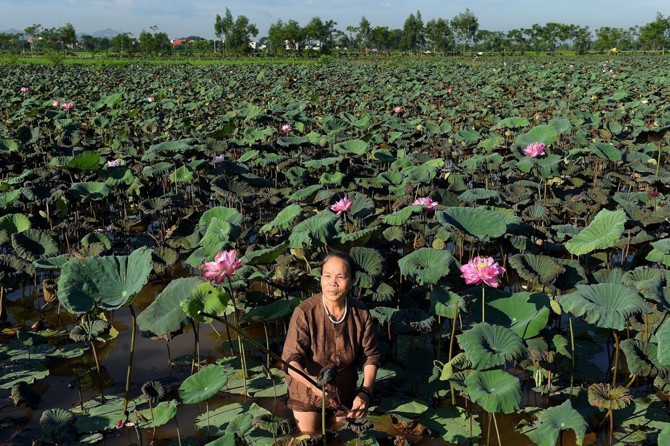 Fabric of success: How 'lotus silk' is weaving its way into Vietnam