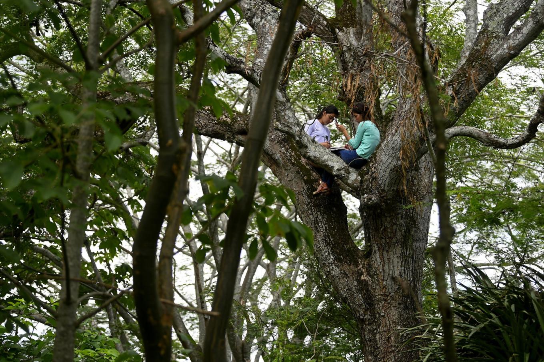El Salvadoran sisters attending online classes up a tree