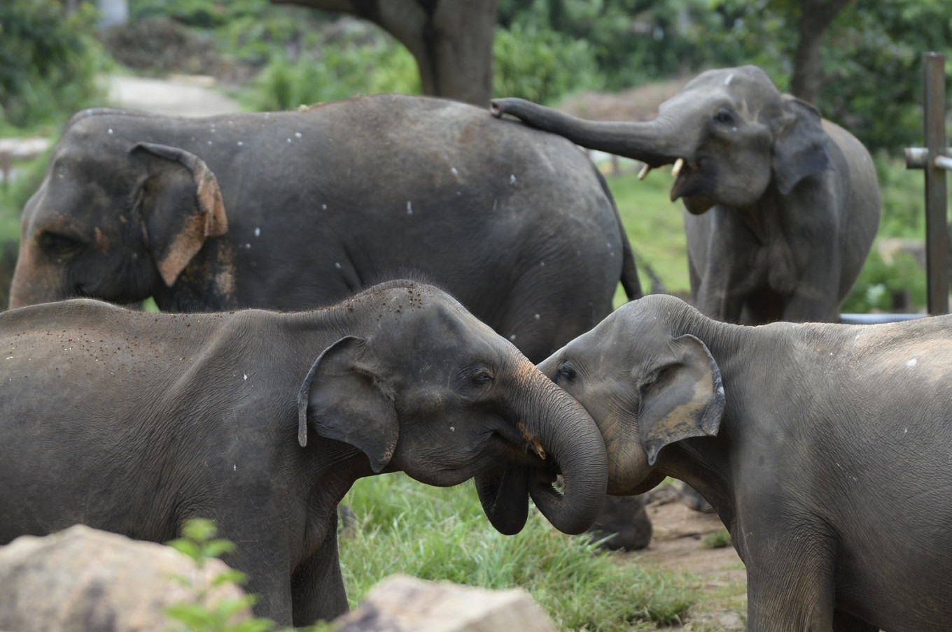 Sri Lanka to ban imports of plastic goods to protect elephants