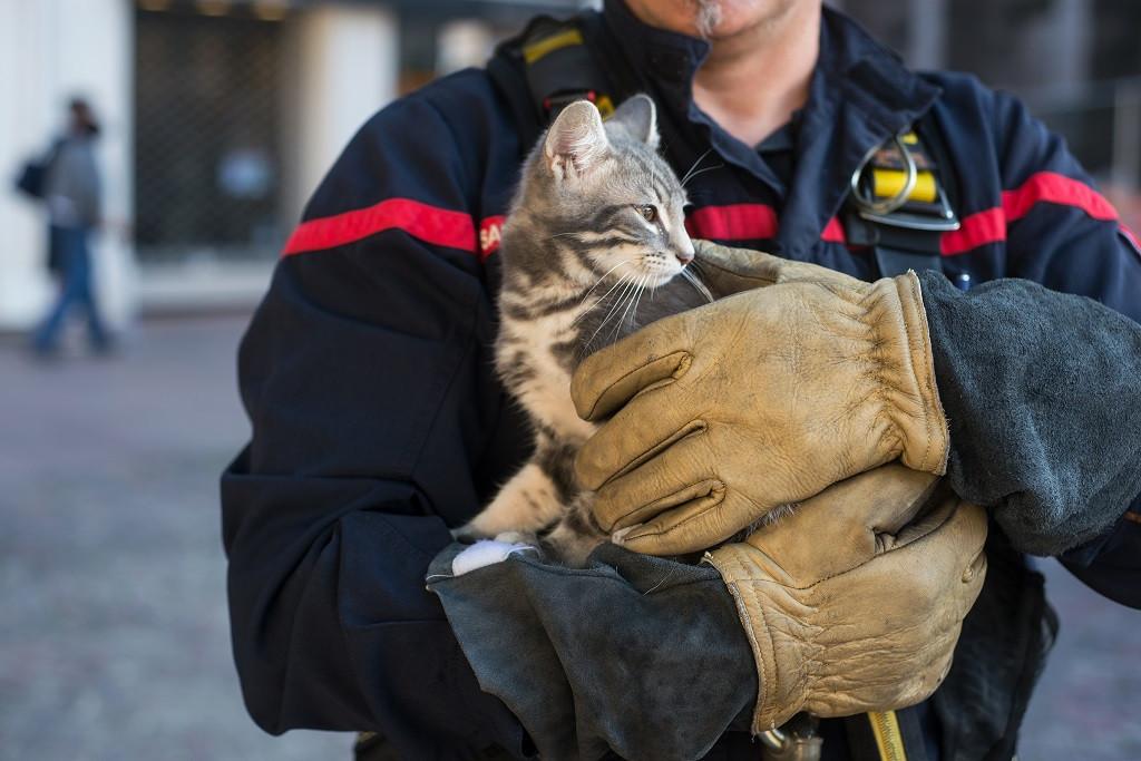 West Jakarta firefighters save kitten stuck inside water jug