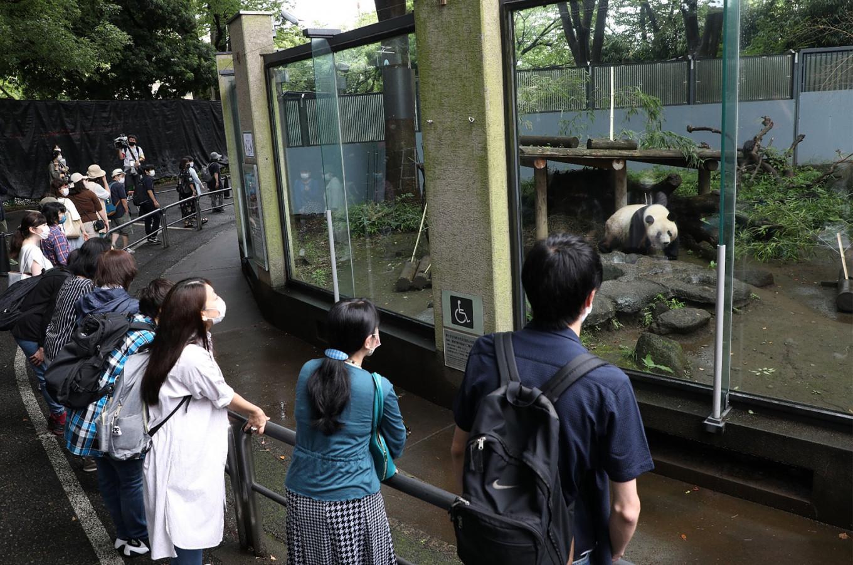 Tokyo zoo reveals new panda enclosure
