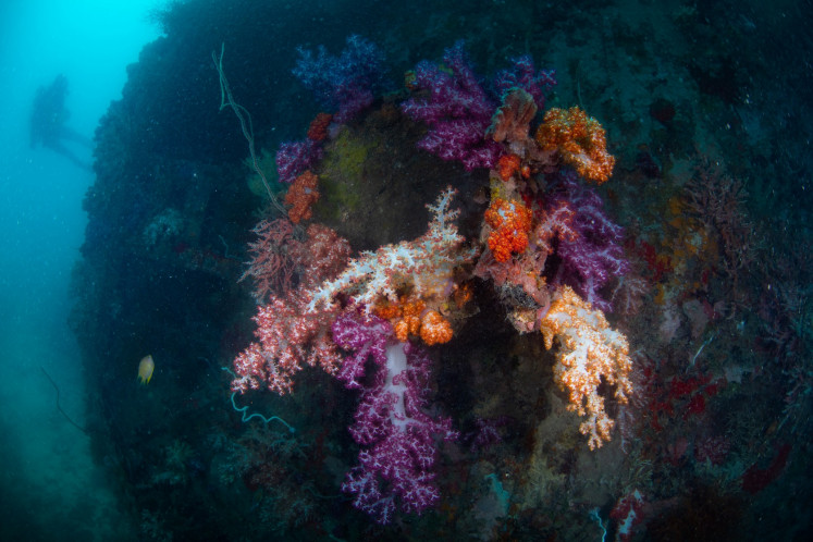 Colorful: The visibility in the waters of the Thousand Islands region is good enough for divers to enjoy the sights of corals.