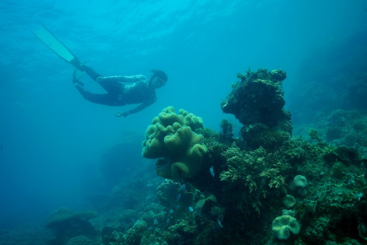 Like a fish: Dive participants can also opt to take in a free diving session.