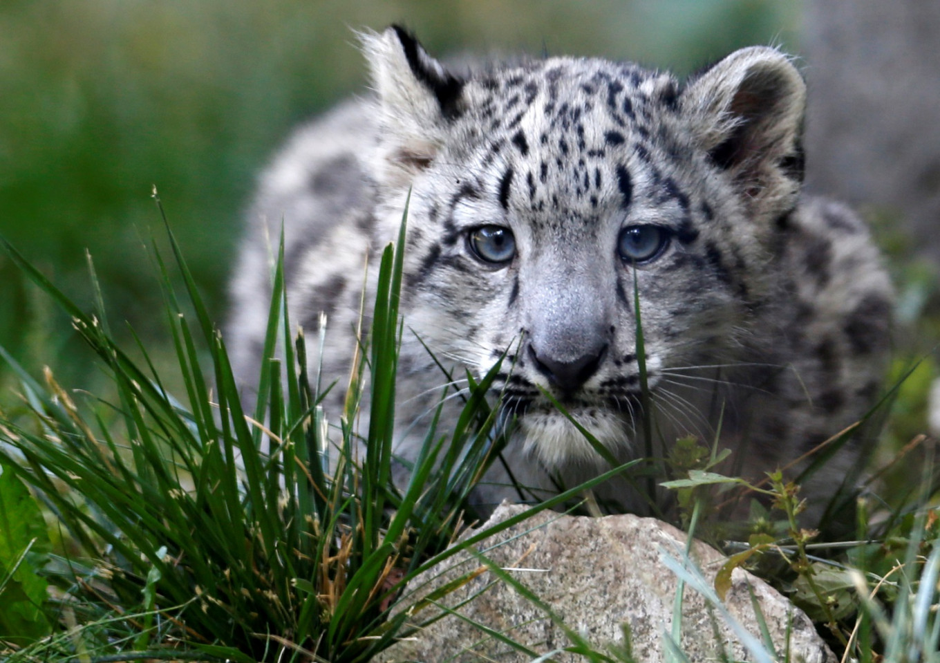 As world falls behind on UN wildlife targets, bright spots offer hope