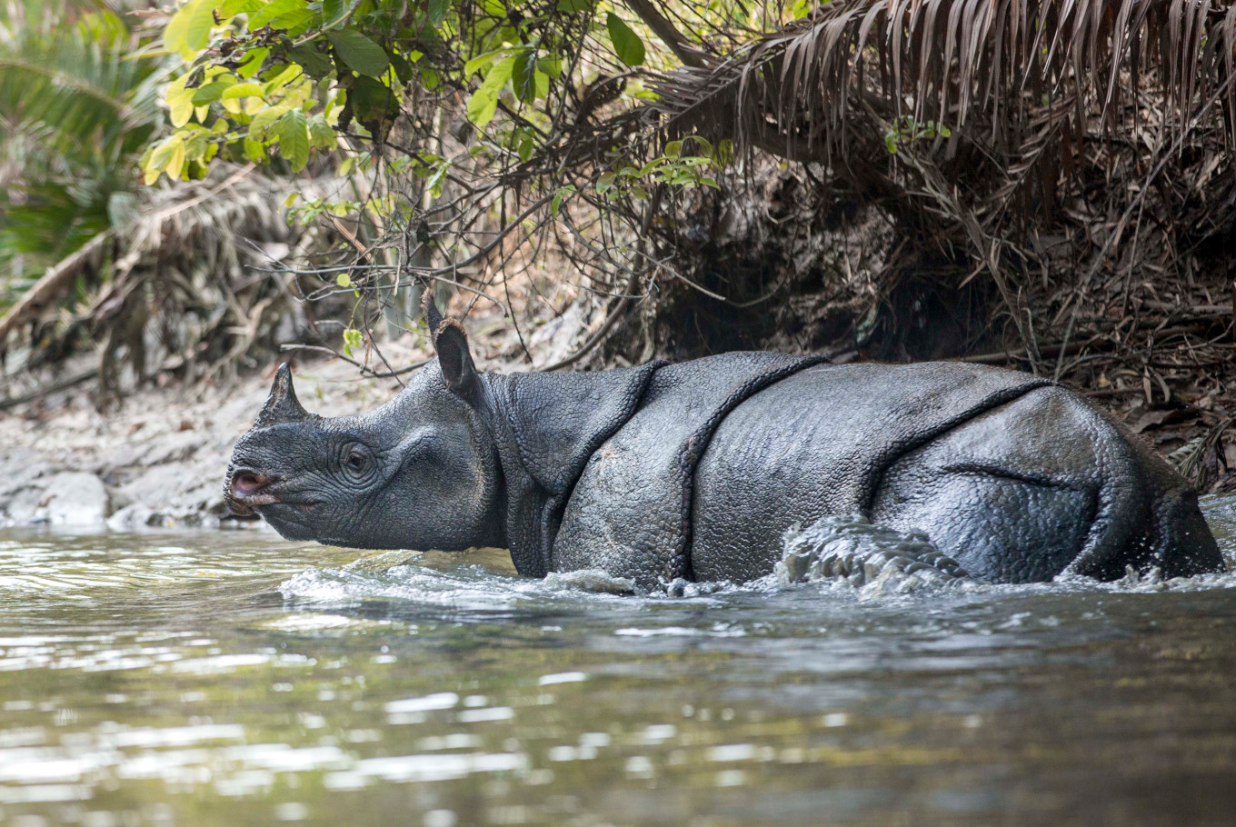 'Javan Rhino Expedition' photography journal aims to spread awareness
