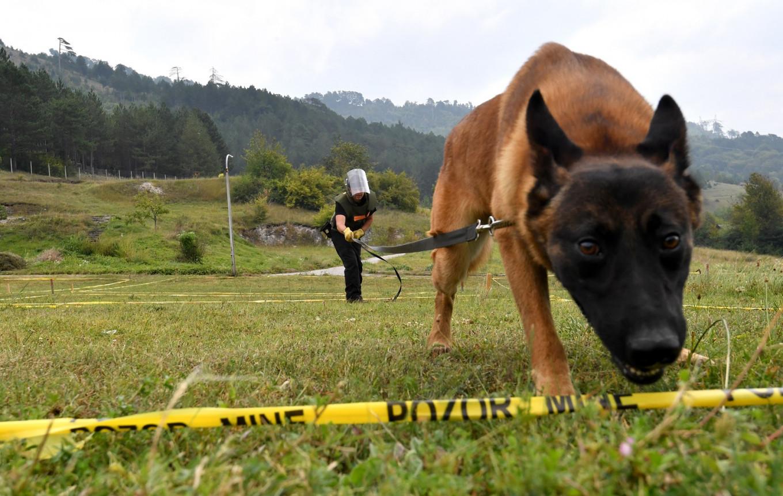 A life-saving 'game': Bosnia trains world's mine-detecting dogs