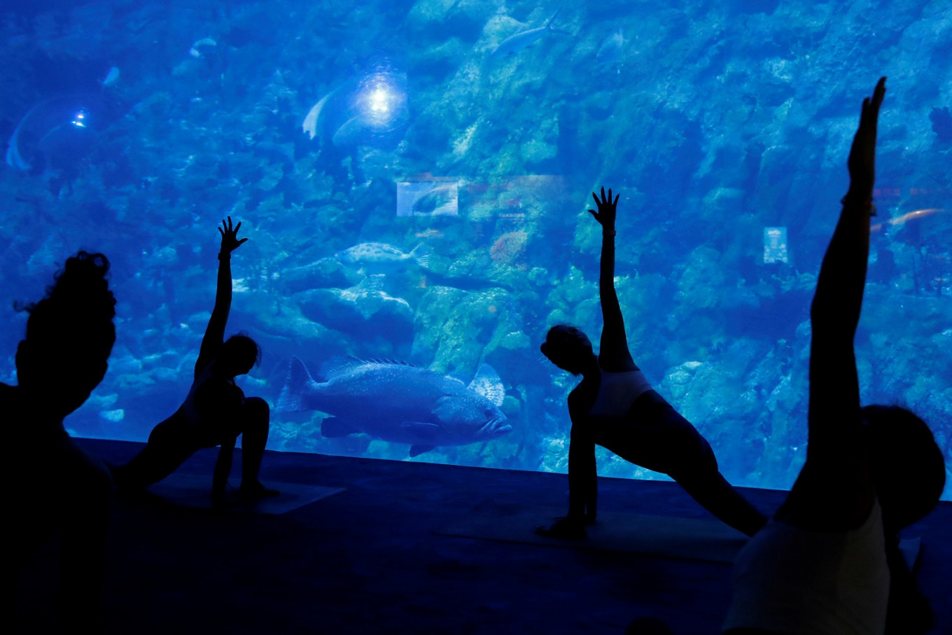 'Be one with the fish': Aquarium yoga among Hong Kong Ocean Park's new offerings