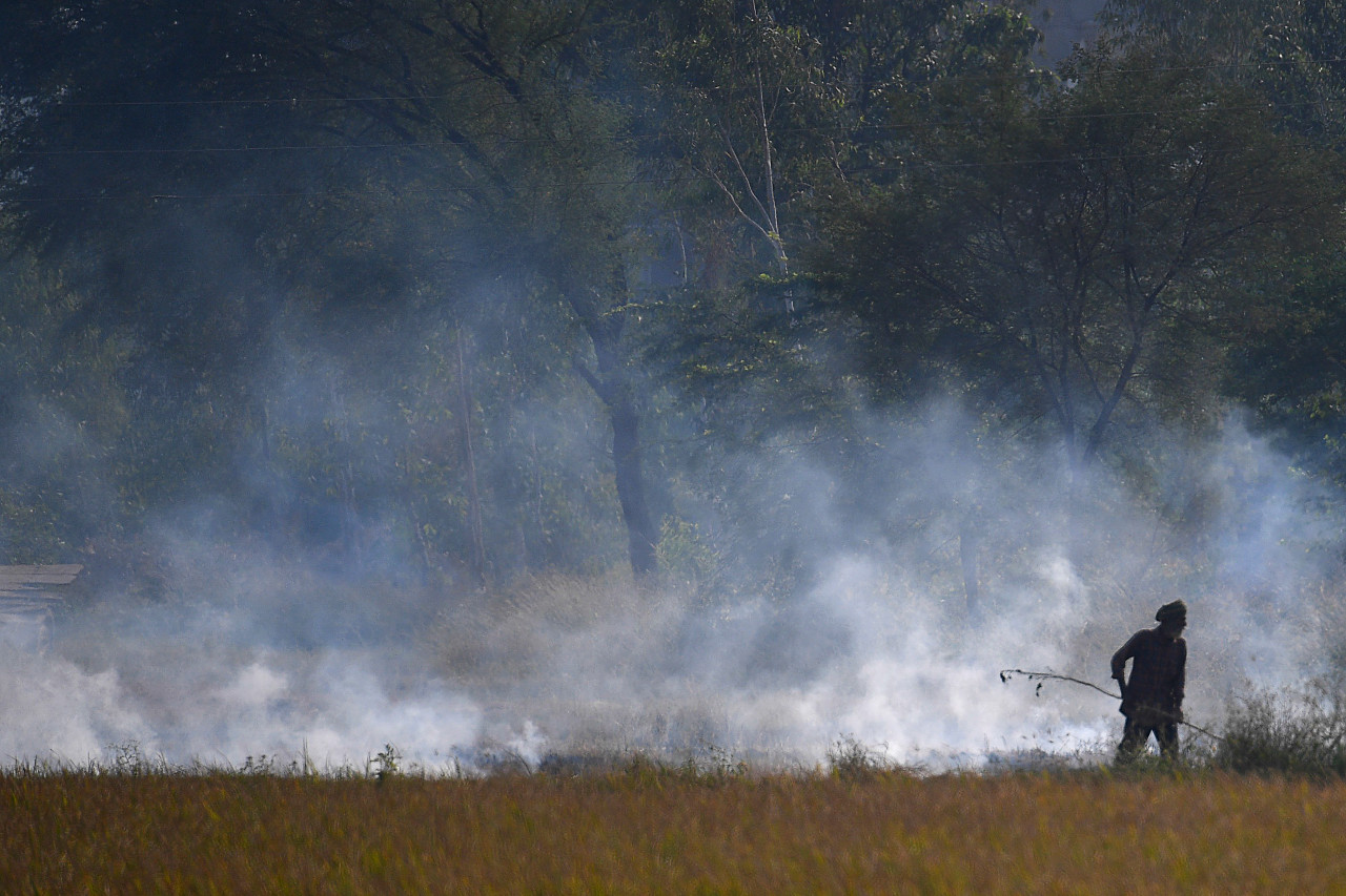 Air pollution linked to 15 percent of coronavirus deaths: study