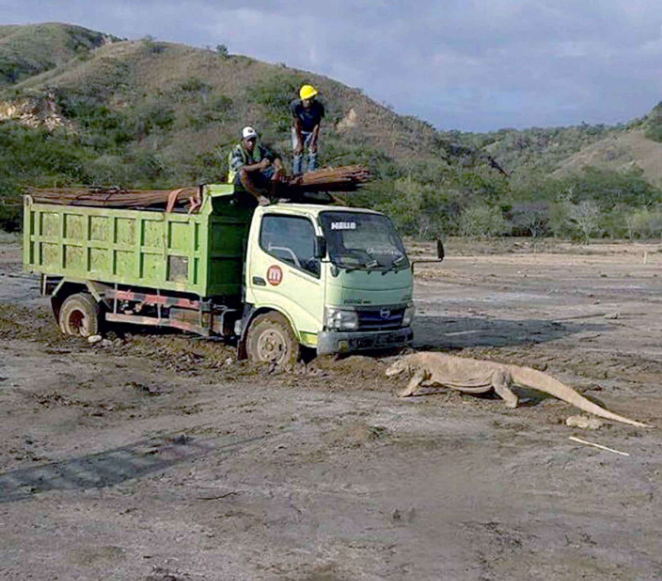 Komodo dragon's 'Tiananmen moment' sparks concern over prime tourism project