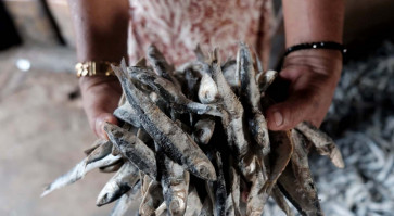 The fisherman and the fish: A glance at the salted-fish business in Tanjung Bing...
