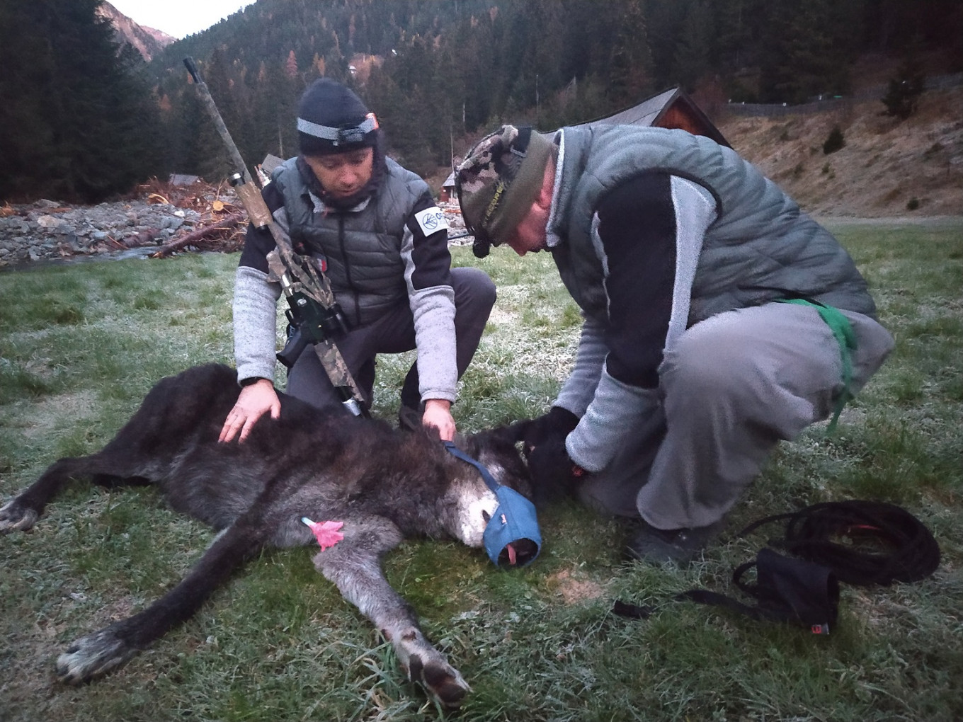 Rangers catch escaped Canadian wolf in France