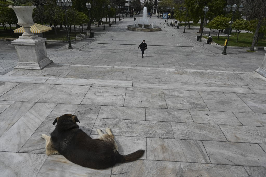 Greece makes animal abuse punishable by up to 10 years jail