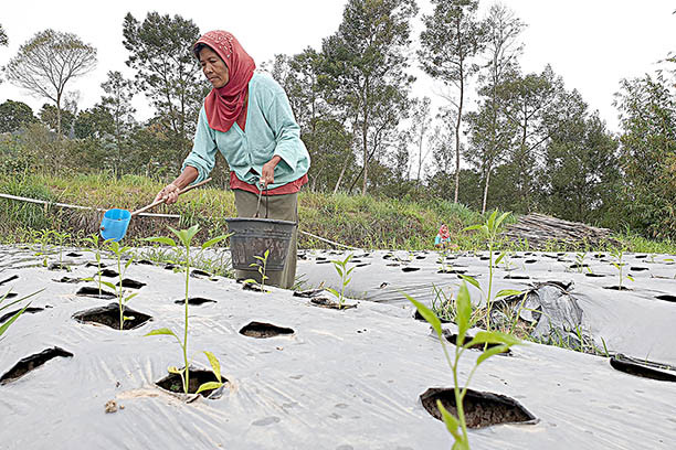 WFP reaffirms support for Indonesia's food security in new strategic plan