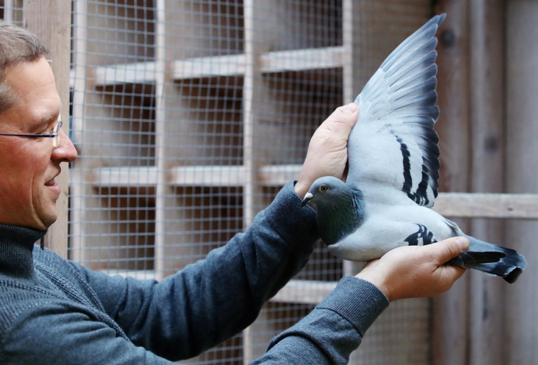 Belgian racing pigeon flies past record in auction