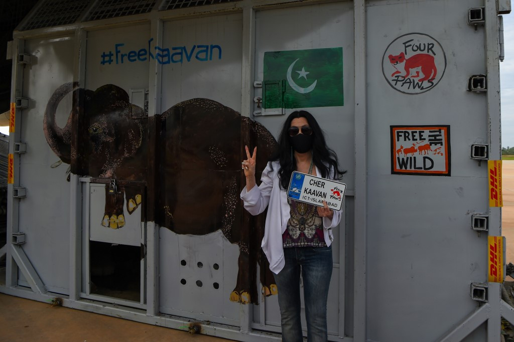 Kaavan, Pakistan's lonesome elephant, starts new life in Cambodia
