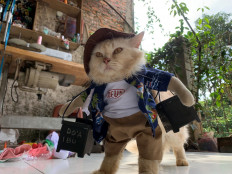 A cat wears a cosplay costume in Bogor, on the outskirts of Jakarta, Indonesia, November 26, 2020. Reuters/Yuddy Cahya Budiman