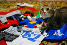 A cat sits among its cosplay costumes in Jakarta, Indonesia, November 29, 2020. Reuters/Ajeng Dinar Ulfiana