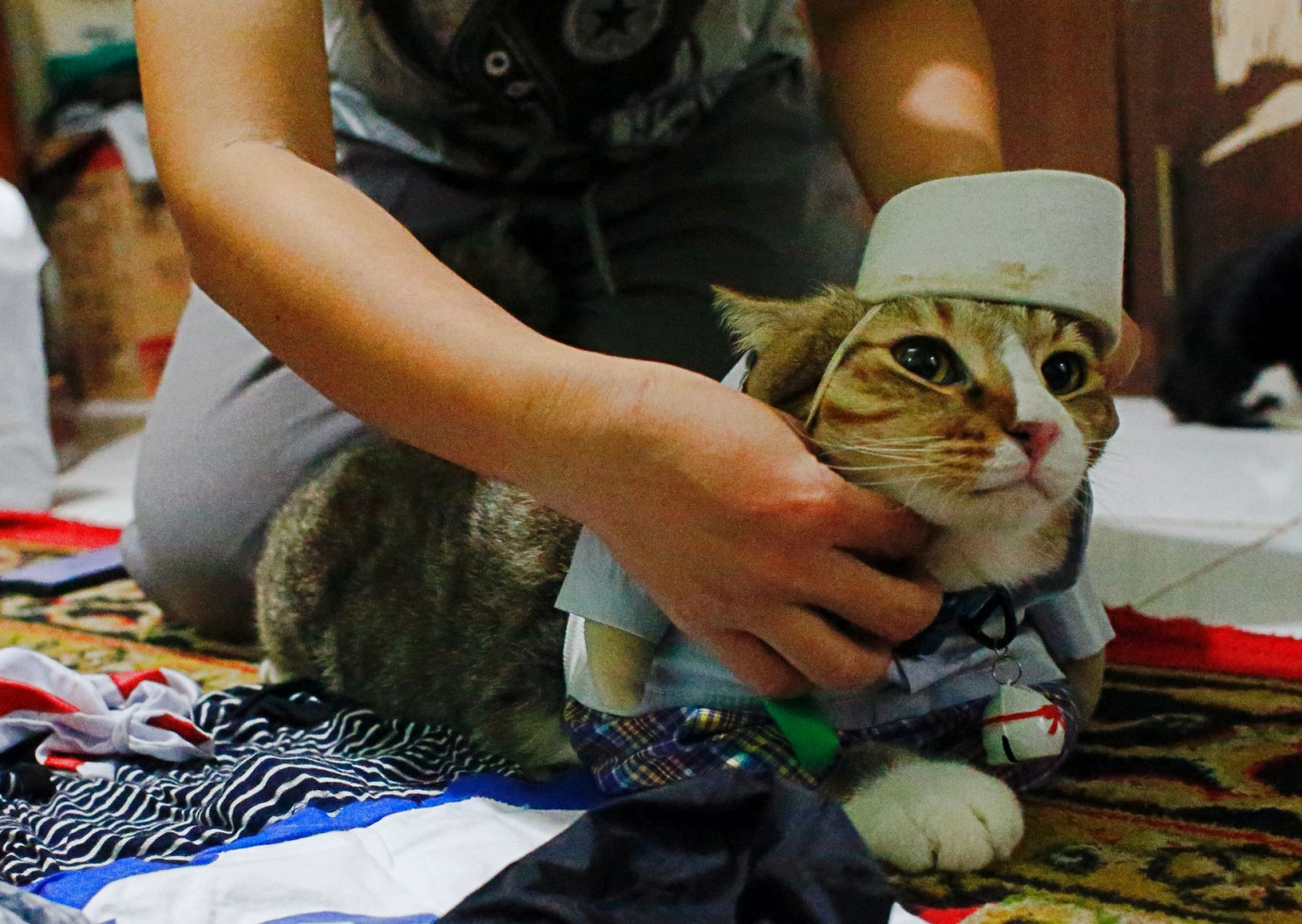 A cat is dressed in a cosplay costume in Jakarta, Indonesia, November 29, 2020. Reuters/Ajeng Dinar Ulfiana
