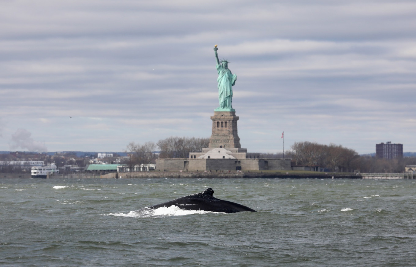 Humpback whale in New York Harbor ready for closeup at Statue of Liberty -  Environment - The Jakarta Post