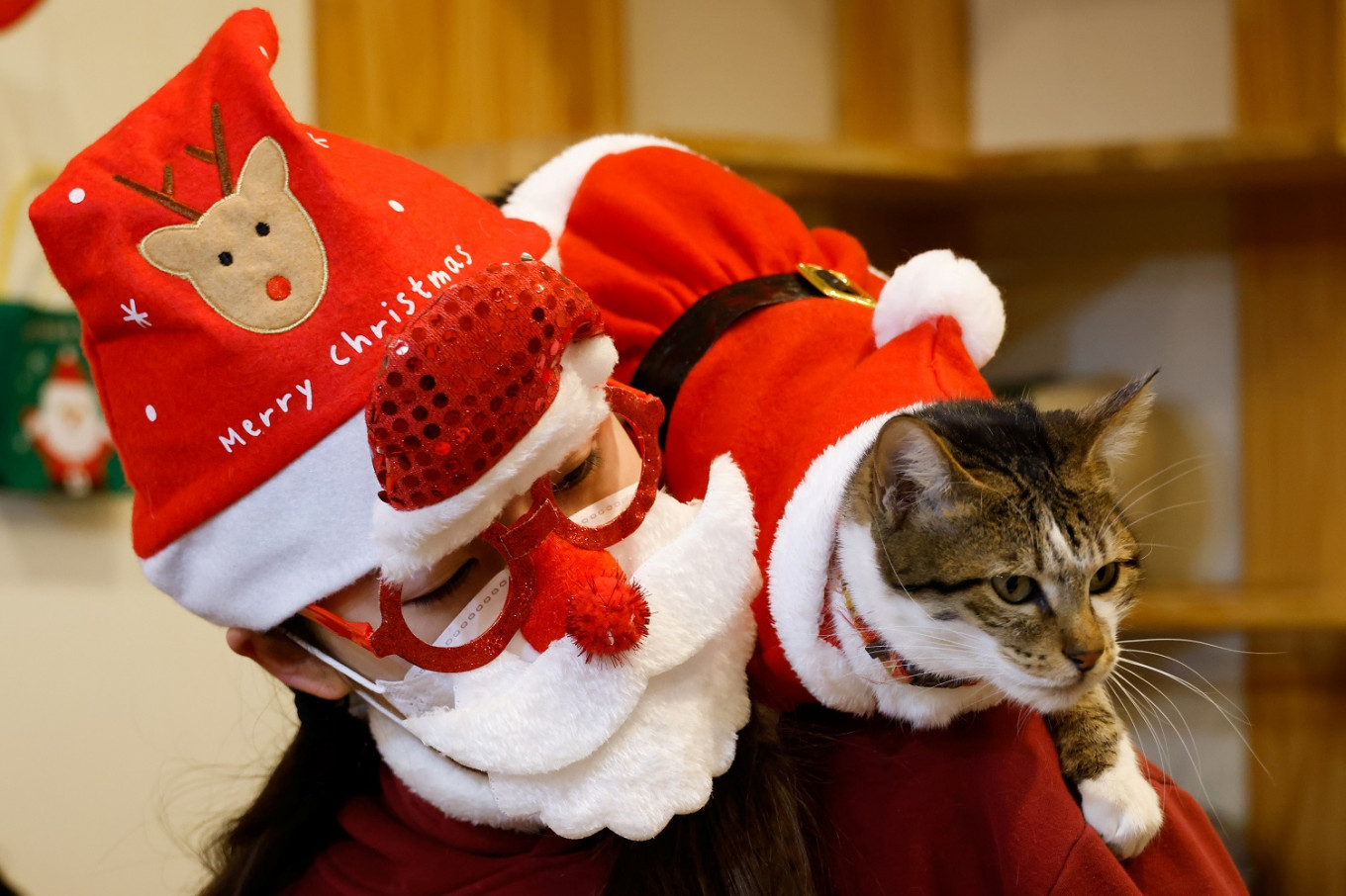 Rescue cats don Santa suits for purrfect Korean Christmas