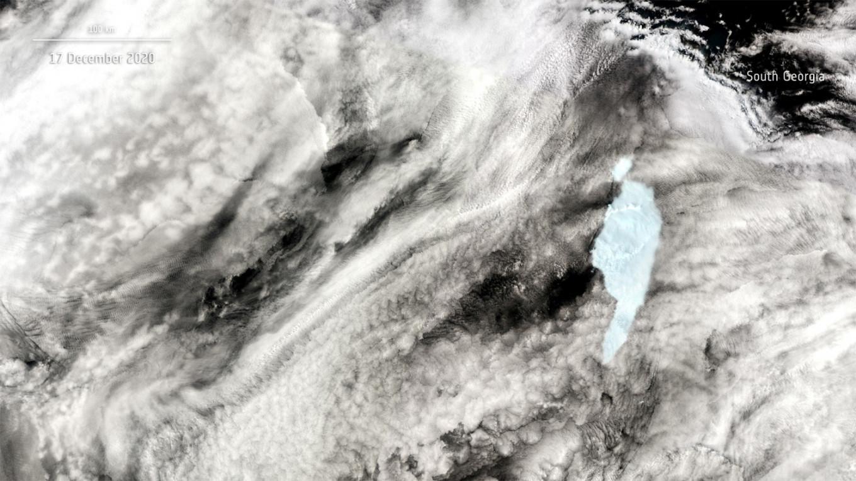 Massive iceberg pivots, breaks near south Atlantic penguin colony island