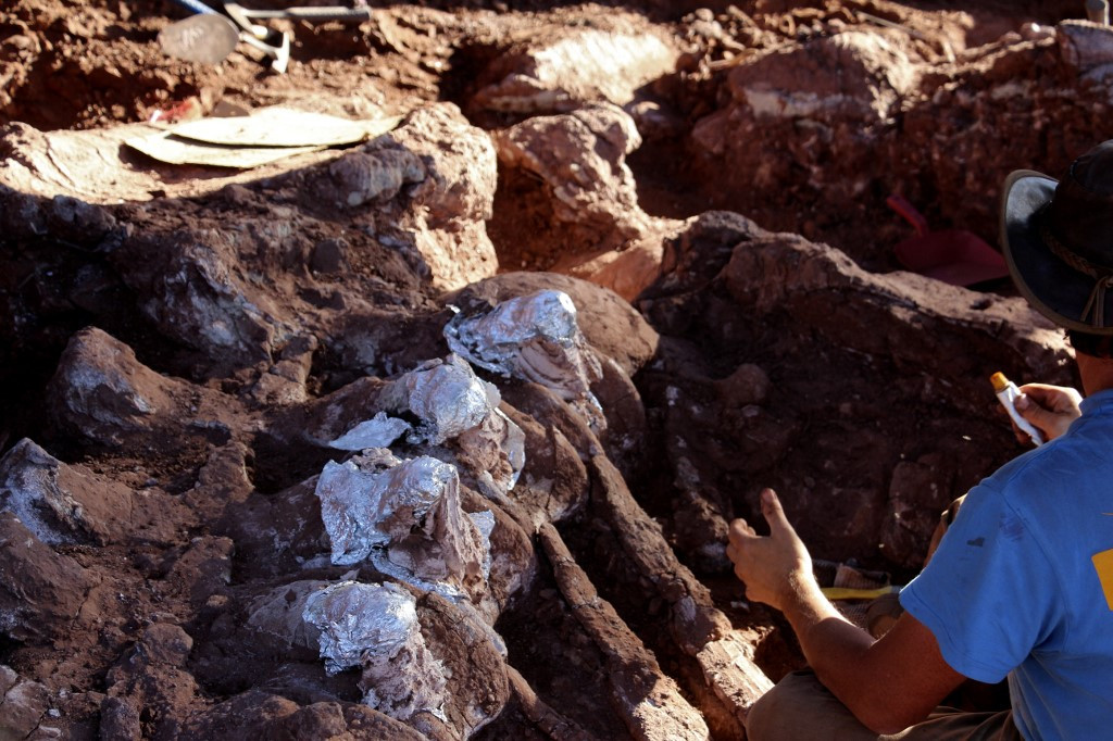 New Patagonian dinosaur may be largest yet: scientists