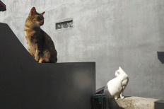 "Regenerative sun: Two cats sunbathe on Jan. 26, 2021 in Situgintung, South Tangerang. Sunlight helps trigger the body to produce vitamin D, which is essential to maintaining both physical and mental health against our ""kryptonite"", the coronavirus. (Courtesy of Wienda Parwitasari/-)"